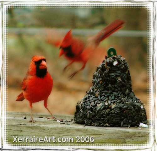 Cardinal - this is acutally two images photoshopped together to look like flight and landing