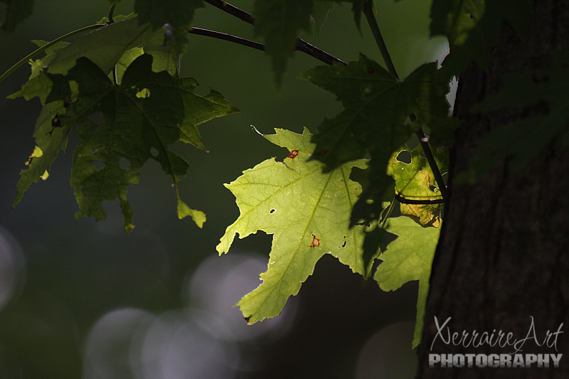 Leaf and light