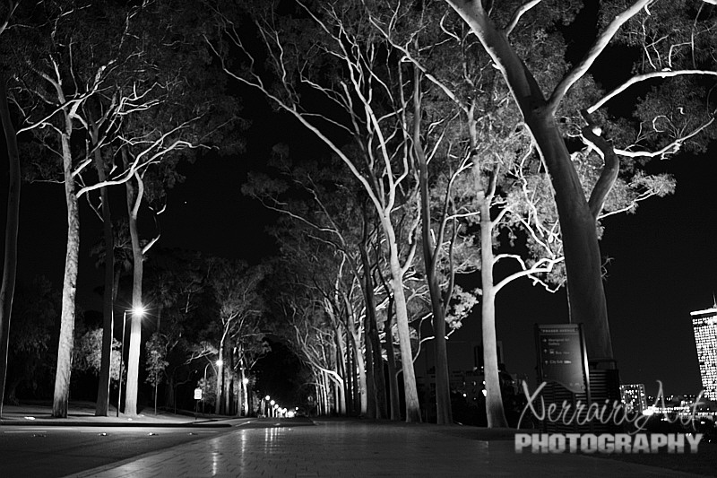 King's Park in black and white