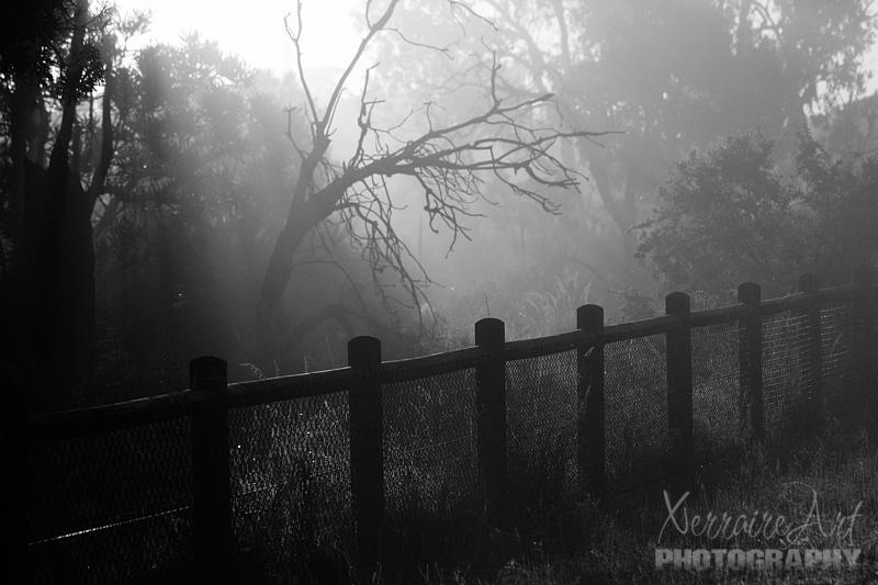 Koondoola fog
