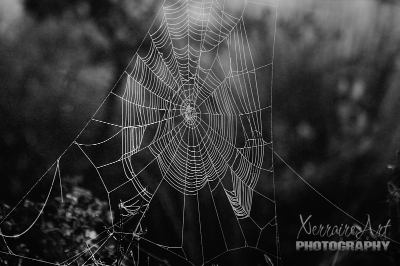 spiderweb in black and white