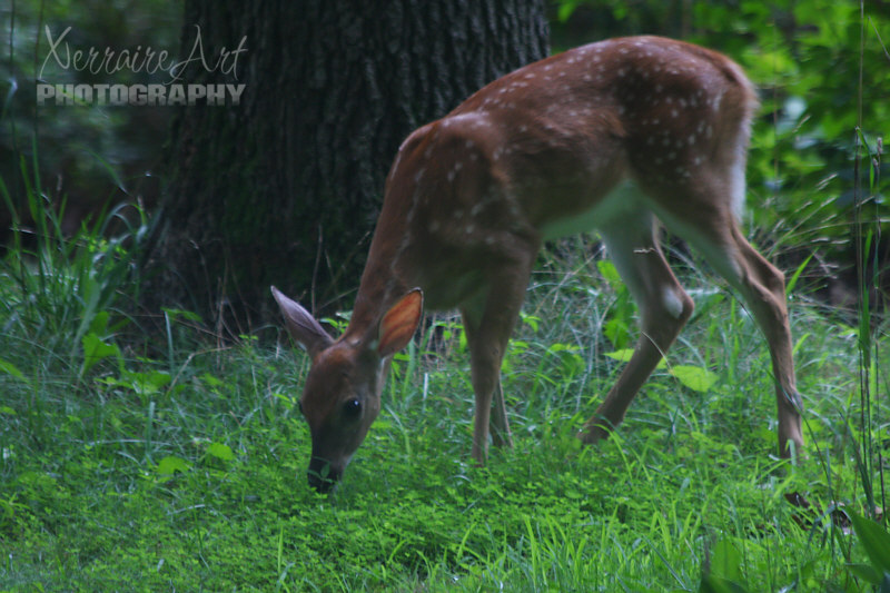 Baby deer in the morning