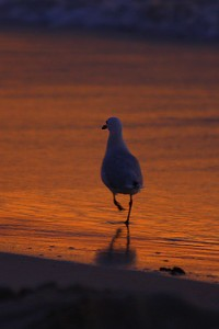 Sunset on the Gull