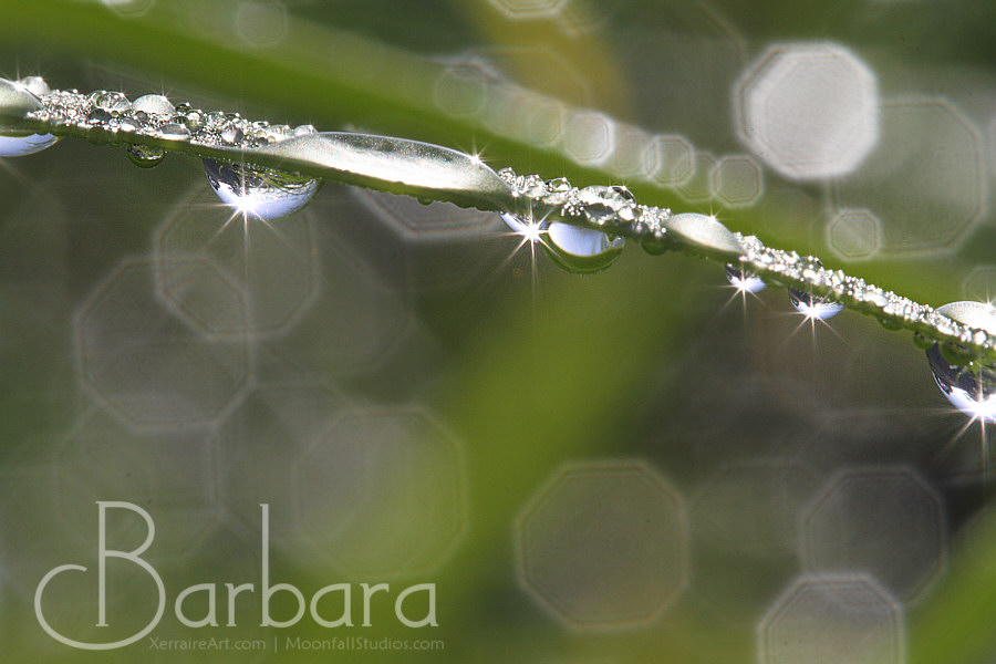 raindrops on the gum leaves look like jewels