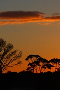 Wheatbelt Sunset